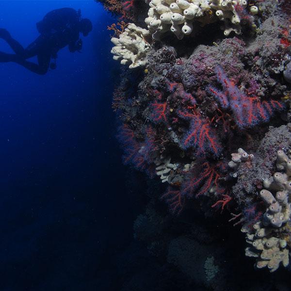 Foto Corallo Rosso Diving Continente Blu
