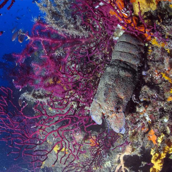Foto Magnosa Diving Continente Blu